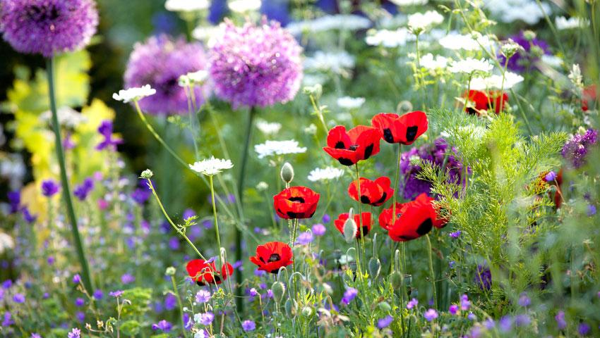 help de natuur met wilde bloemen